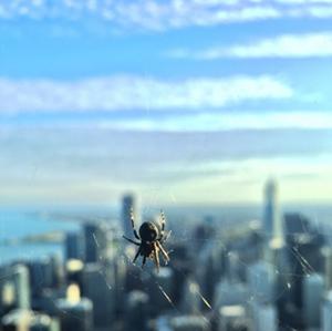 spider-details