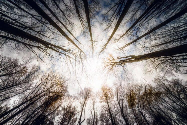 自然风景照 trees-1