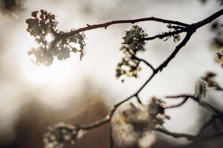 自然风景照 Sunlight