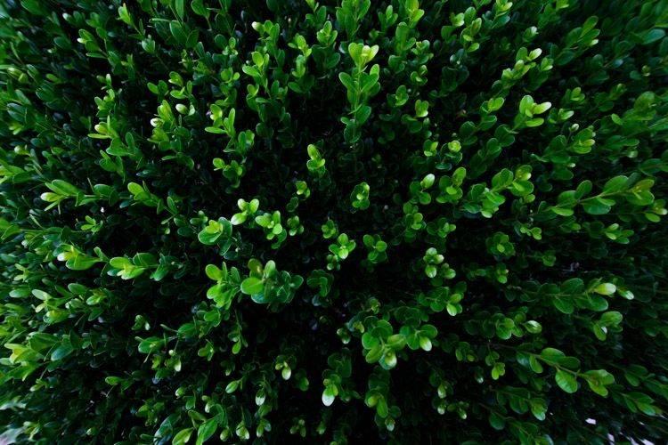 自然风景照 Hedge